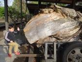 103年羅東林業文化園區:羅東林務局文化園區31.JPG