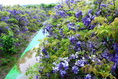 2013紫藤咖啡園:1744197434.jpg