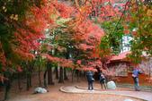2011福壽山農場~楓景變裝秀:1051285040.jpg