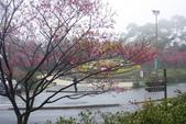 2013陽明山~迷霧朦朧之美:1308565166.jpg