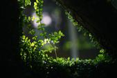 2012繡球花.阿勃勒.:1603065233.jpg
