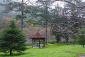 2012武陵冬景~楓葉紅銀杏黃:1305735542.jpg