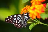 蝴蝶真美麗:1677431252.jpg