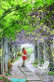 2013紫藤咖啡園:1744197461.jpg