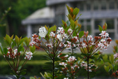 2012與春天有約~台北植物園:1426725639.jpg