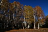 北疆金秋(3)喀納斯湖、禾木村:IMG_4163.JPG
