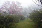 2013陽明山~迷霧朦朧之美:1308565162.jpg