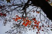 """2013台北植物園~獨領""""楓""""騷:1029877575.jpg"""