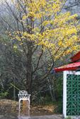 2012武陵冬景~楓葉紅銀杏黃:1305735491.jpg