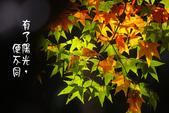 """2013台北植物園~獨領""""楓""""騷:1029854782.jpg"""