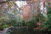 2012武陵冬景~楓葉紅銀杏黃:1305735520.jpg