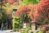 98.04賞楓:台北奧萬大.植物園:1173782992.jpg