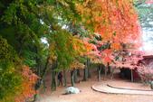 2011福壽山農場~楓景變裝秀:1051285041.jpg