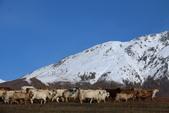 北疆金秋(3)喀納斯湖、禾木村:IMG_4797.JPG