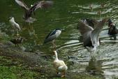 飛鳥練拍~大安森林公園:v 097.JPG