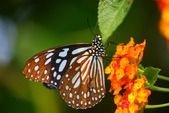 蝴蝶真美麗:1677431253.jpg