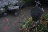 2013陽明山~迷霧朦朧之美:1308565167.jpg