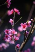 多彩貴州8日遊--油菜花田.龍宮.雙乳峰景區.......:1382382031.jpg