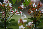 2012與春天有約~台北植物園:1426725640.jpg