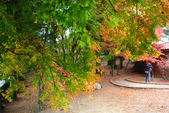 2011福壽山農場~楓景變裝秀:1051285042.jpg