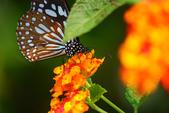 蝴蝶真美麗:1677431254.jpg