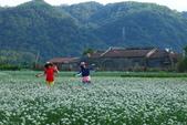 2015大溪韭菜花田:IMG_9581.JPG