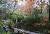 2012武陵冬景~楓葉紅銀杏黃:1305735521.jpg