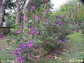 珠兒愛拍:低矮灌木:野豔牡丹12