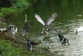 飛鳥練拍~大安森林公園:v 100.JPG