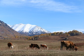 北疆金秋(3)喀納斯湖、禾木村:IMG_4846.JPG