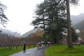 2012武陵冬景~楓葉紅銀杏黃:1305735544.jpg