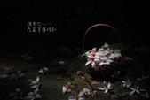 2012共桐賞花:大山背客家人文生態館:1273981876.jpg