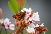 2012與春天有約~台北植物園:1426725641.jpg