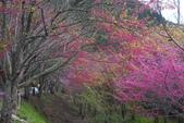 2012武陵農場賞櫻:1837851652.jpg