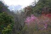 2012武陵農場賞櫻:1837851678.jpg