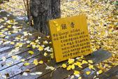 2012武陵冬景~楓葉紅銀杏黃:1305735494.jpg