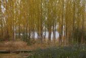 北疆金秋(2)野鴨胡、五彩灘、觀魚亭、白哈巴村、三道灣、圖瓦村落:IMG_0669.JPG