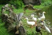 飛鳥練拍~大安森林公園:v 026.JPG