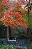 """2013台北植物園~獨領""""楓""""騷:1029877521.jpg"""