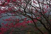 2013陽明山~迷霧朦朧之美:1308565214.jpg