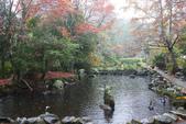 2012武陵冬景~楓葉紅銀杏黃:1305735522.jpg