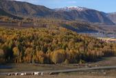 北疆金秋(3)喀納斯湖、禾木村:IMG_4833.JPG