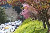 2012武陵農場賞櫻:1837830426.jpg