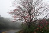 走春~陽明山、竹子湖、硫磺谷:V 010.JPG