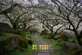 2012南投信義鄉賞梅~烏松崙:1335907096.jpg