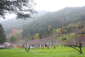2012武陵冬景~楓葉紅銀杏黃:1305735545.jpg