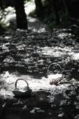 2012共桐賞花:大山背客家人文生態館:1273981877.jpg