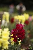 9803花兒寫真:1470786622.jpg