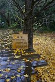 2012武陵冬景~楓葉紅銀杏黃:1305735495.jpg