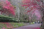 2012武陵農場賞櫻:1837851653.jpg